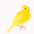 Canary Cash