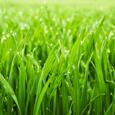 GrassisGreenCap